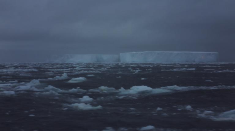6_Antarctica_Red_knot