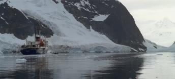 _Red_knot_Antarctica